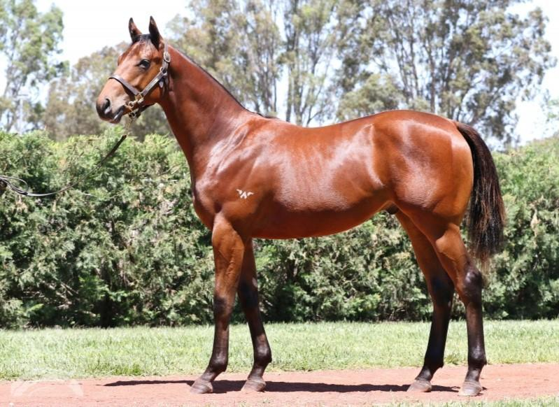 Just 5% left in ZOUSTAR colt...he's a BEAST!!! Looks early 2yo type...don't miss!