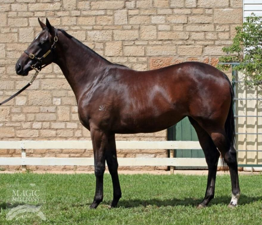 She is a belter! Major rap from the breaker he loves her...NICCONI filly with ROB HEATHCOTE!!