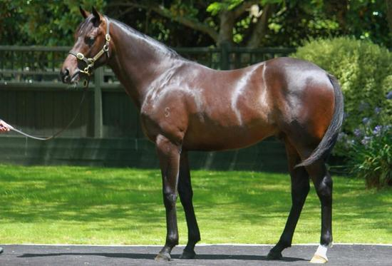 DK WEIR trains!!!! Last crop of HIGH CHAPARRAL's DONT MISS this colt!!!