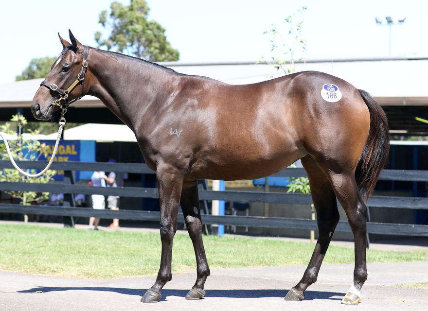 A very strong rap on this very strong filly by Gr 1 winner Shamus Award