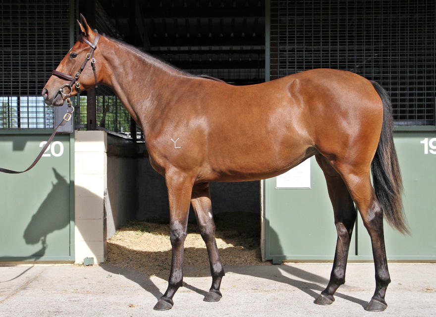 DARREN WEIR trains this quality filly out of a successful speedy mare...great combination!