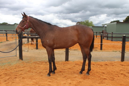 15% left! DARREN WEIR trains this quality filly out of a successful speedy mare...great combination!