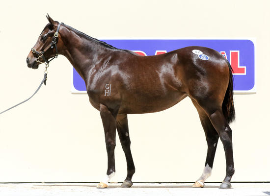 DK WEIR trains this filly out of a Group 2 winning DANEHILL mare...60% GONE ALREADY!