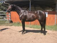 WRITTEN TYCOON on FIRE!!!! 6 Metro winners 10th February!! 15% left in this colt!