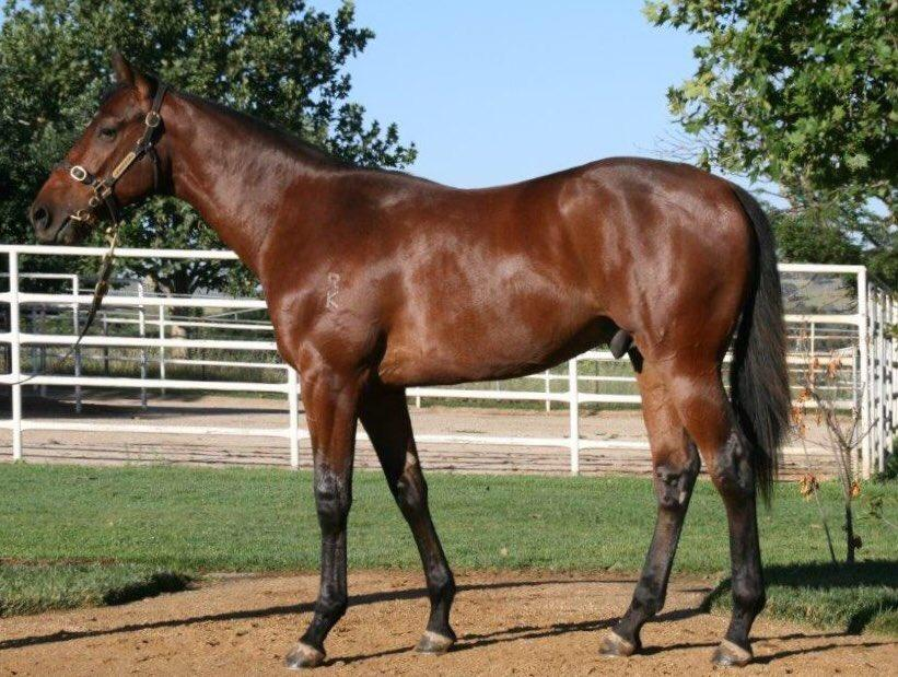 30% remain is LONHRO colt ..mare of MOMENT OF CHANGE ...100% winners to runners!! Hayes/Dabernig!!