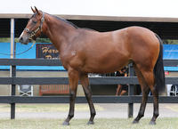 25% left in ZOUSTAR filly...ZOUSTAR yes he is a STAR sire already..