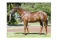 DK WEIR trains filly with a rap! Terrific rap from breaker!!!!!!