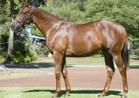 10% left in this filly with a rap! Terrific rap from breaker...Hayes/Dabernig train!!