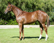 Stunning filly by STARSPANGLEDBANNER, TONY McEVOY trains..she's all power!