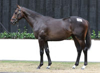 20% left in SHOCKING colt bred to be a Derby/Cups horse!!
