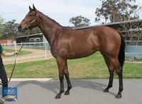 CIARON MAHER trains stunning PIERRO filly! 30% remains...