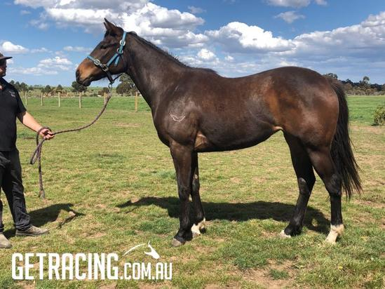 Hayes/Dabernig team train this cracking filly! SO YOU THINK'S are winning everywhere!