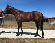 10% left!!! Brent Stanley trains! This colt is a cracker!