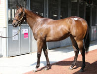 ZOUSTAR filly...the breed are on fire! Sunlight a Gr 1 filly by ZOUSTAR!
