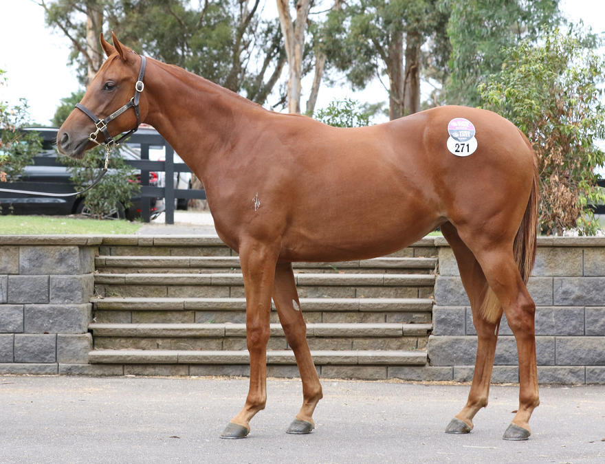ZOUSTAR filly...here she is!! She's a beauty!!