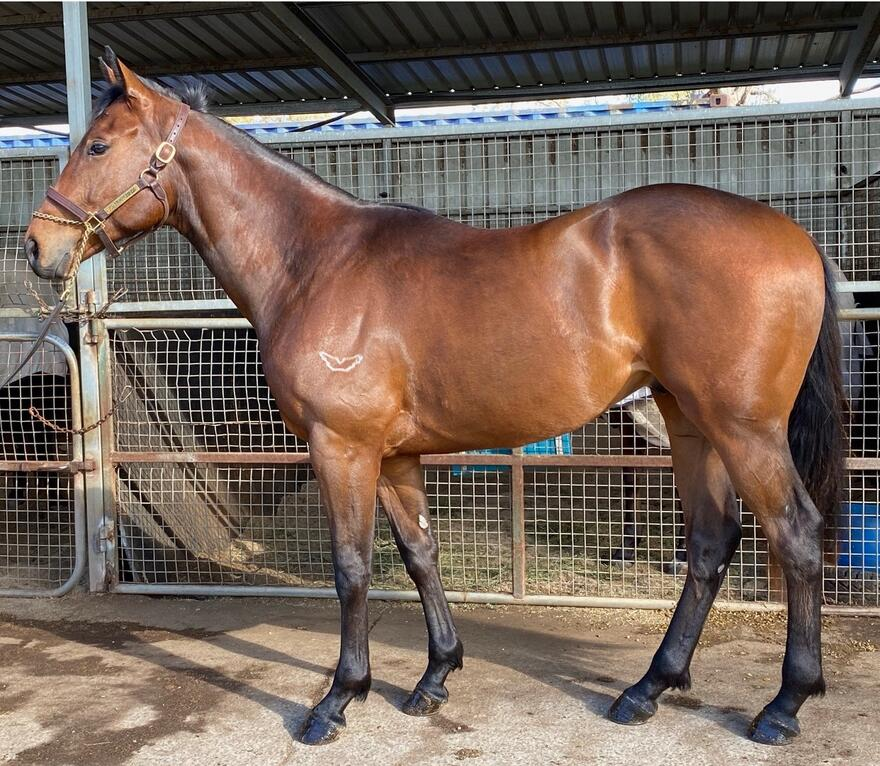MAHER/EUSTACE train cracking LONHRO colt...we were very keen to get him!