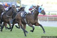 Mr Utopia simply outstanding at Flemington