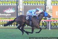 Mr Utopia draws well in $1 million Railway Stakes