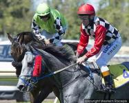 Gauged draws well in W.A.T.C. Derby