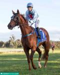 Team Wolfe bags the daily double at Pinjarra