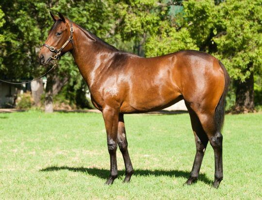 Inglis Filly Purchase