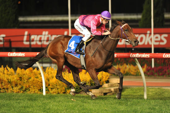 Spanish Reef to return at Moonee Valley