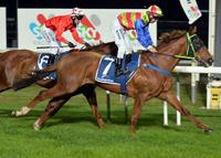 Trainer daring to dream with former Sydney galloper