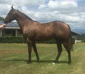 Monashee Mountain Filly Available