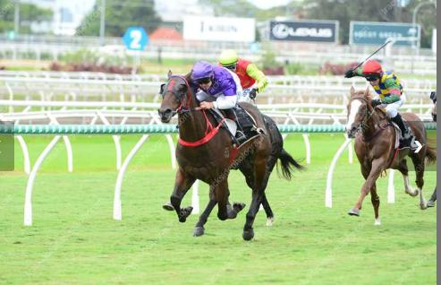 Mufasta Strong In Maiden Win