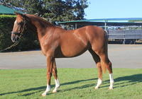Shares Available in this Flashy Colt!