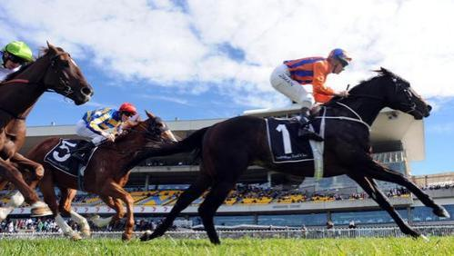 WINDJAMMER - remember the name because a star was born at Rosehill Gardens yesterday.