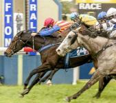 Braces Wins Grafton Guineas