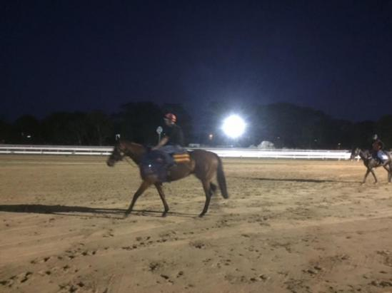 Big Girl coming off the track this morning