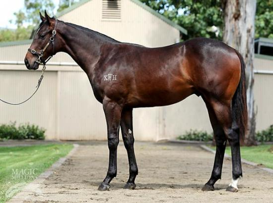 PIERRO  COLT PURCHASED