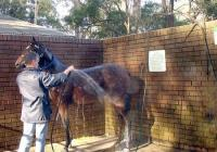 Horse Wash.jpg
