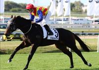 PIERATA Another Winner by Pierro
