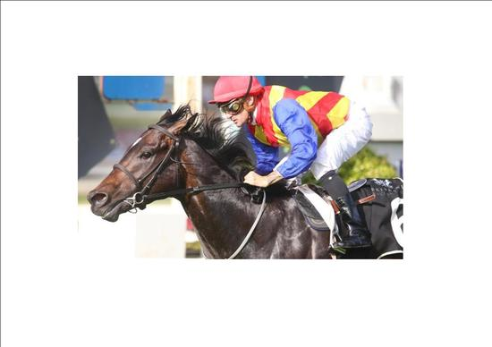 PIERATA First Up Win At Doomben