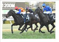 PIERATA WINS THE MISSILE STAKES