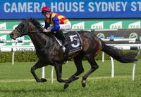 PIERATA runs in the ALL AGED STAKES