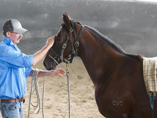 New Filly doing well at the Breakers
