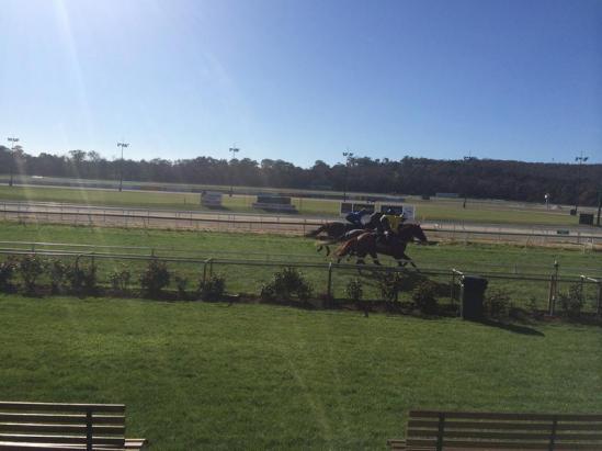 Trotter Racing at Full Gallop