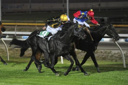 Kaitoa wins at Cranbourne's First Night Meeting.jpg