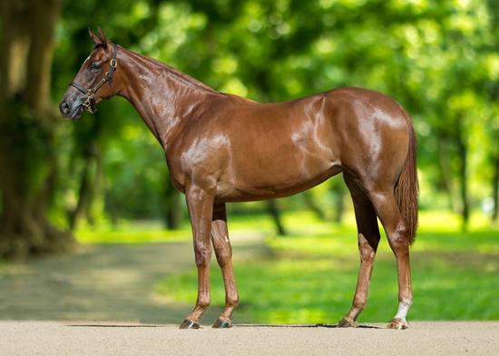 Turffontein - Inkster Filly