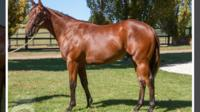 Kuroshio colt heats up cold day at Cranbourne