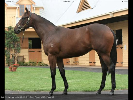 I Am Invincible X Oasis Bloom Filly 15