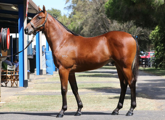 Reward For Effort X Mirabel 15' Colt