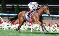 Star Shines Again And Set To Shine Brighter At Australian Racehorse Awards