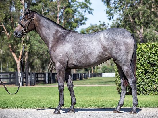 Tapit X Anatole 16 Filly