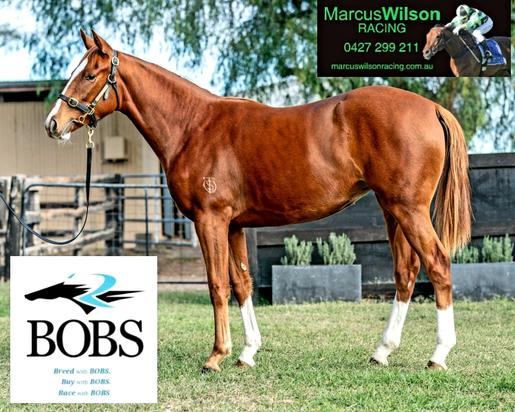 GET INVOLVED NOW - 2YO STAR WITNESS FILLY