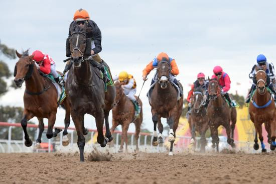 King of the Ark scores dominant debut win